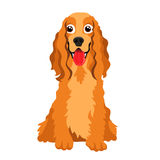 Cute dog breed Cocker Spaniel Stock Images