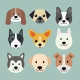 Cute dog breeds amazing flat vector dog face stock illustration