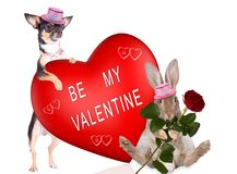 Cute dog with cute bunny make love for valentine Stock Image