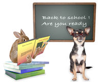 Cute dog&bunny rabbit go back to school Royalty Free Stock Images