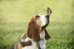 Cute dog with butterfly on his nose Royalty Free Stock Photos