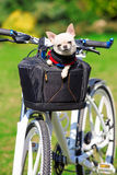 Cute dog in bycicle basket Stock Image