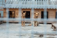Cute dog in a cage. They are waiting for a new owner Stock Images