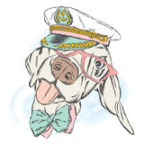 Cute dog in the captain`s cap. Captain. Stock Photo