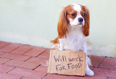 Cute Dog With a Cardboard Sign Royalty Free Stock Photography