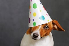 Cute dog in carnival party hat Royalty Free Stock Image