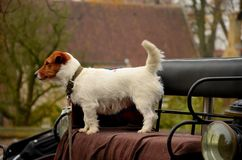 Cute dog on carriage seat Royalty Free Stock Photos