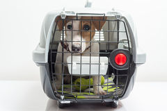 Cute dog in carrier royalty free stock images