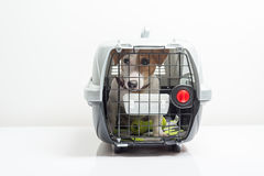 Cute dog in carrier Royalty Free Stock Photos