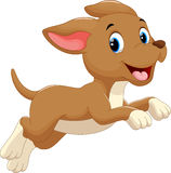 Cute dog cartoon running Stock Images