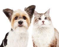 Cute Dog and Cat Closeup Stock Photo