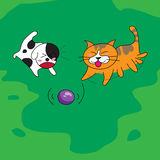 Cute dog and cat playing with ball on the field. Royalty Free Stock Photography