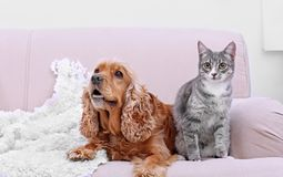 Cute dog and cat together on couch. At home Royalty Free Stock Photo