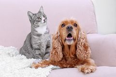 Cute dog and cat together on couch. At home Royalty Free Stock Image