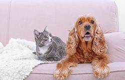 Cute dog and cat together on couch. At home Stock Photo