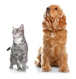 Cute dog and cat together. On white background Stock Images