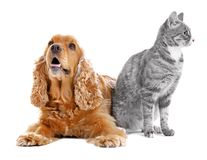 Cute dog and cat together on background. Cute dog and cat together on white background Royalty Free Stock Photos