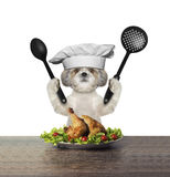 Cute dog chef is preparing chicken. Isolated on white Royalty Free Stock Image