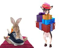 Cute dog chihuahua brings gifts to cute bunny if zwarte piet black pete. Isolated Royalty Free Stock Photo