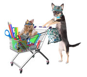 Cute dog chihuahua and cute bunny shopping for back to school supplies. Isolated Stock Images