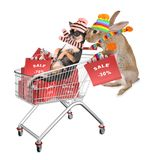 Cute dog chihuahua lay in the cart and bunny drive with car for sale shopping royalty free stock photos