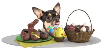 Cute dog chihuahua make an effort above table and looking to the easter eggs Stock Photography