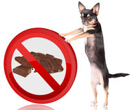 Cute dog chihuahua Push the forbidden road sign away Royalty Free Stock Images