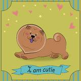 Cute dog Chow. Vector Illustration Stock Photography
