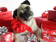Cute dog with Christmas gifts Royalty Free Stock Photography