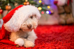Cute dog with Christmas hat. Little cute dog with Christmas hat Royalty Free Stock Image