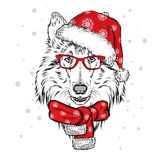 Cute dog in a Christmas hat and sunglasses. Pedigree dog.  Royalty Free Stock Photos