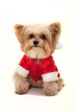 Cute Dog Christmas Stock Photography