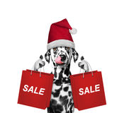 Cute dog with christmas party dress hold up with shopping bag Stock Images