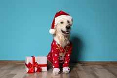 Cute dog in Christmas sweater and hat with gift. On floor near color wall royalty free stock photos