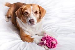 Cute Dog close up Stock Photos