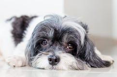 Cute dog. Close up face of cute dog stock image