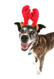 A cute dog in a costume Royalty Free Stock Images