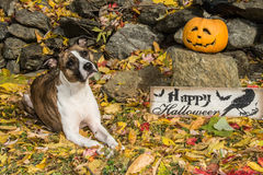 Cute Dog Costume stock images