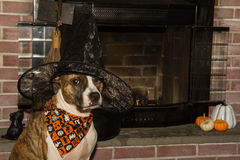 Cute Dog Costume Stock Image