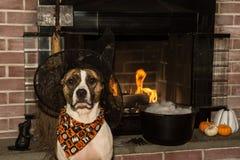 Cute Dog Costume Stock Photo