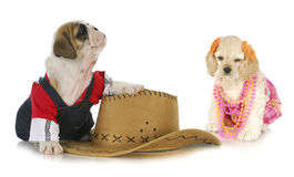 Cute dog couple Royalty Free Stock Images