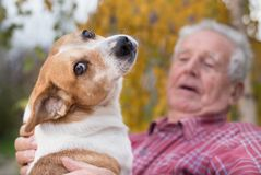 Old man with dog in park. Cute dog cuddling on old man`s lap in park in autumn. Pet love and care concept. Alternative therapy royalty free stock images