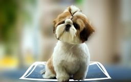 Cute Dog with 3D illusion royalty free stock image