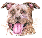 Cute Dog. Dog T-shirt graphics. watercolor Dog illustration. Aggressive dog breed. Royalty Free Stock Image