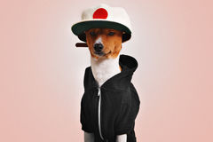 Cute dog dressed in hoodie and trucker hat Royalty Free Stock Photography