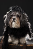 Cute dog dressed up in black vintage style costume Stock Photo