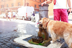Cute dog drinks water from a fountain in Rome, Italy