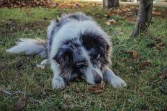 Cute dog eating bone. royalty free stock photos
