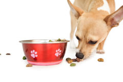 Cute dog eating from bowl Stock Photo