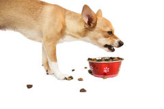 Cute dog eating from bowl Royalty Free Stock Photography